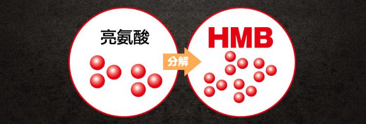 但是亮氨酸如果不轉化成HMB的話是無法發揮效果的。