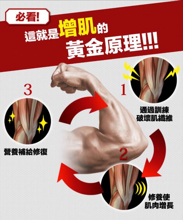 """每一次的鍛鍊都想高效率的增加肌肉,而這需要養成""""鍛鍊→營運補充→休養""""這樣的習慣是最重要的。"""