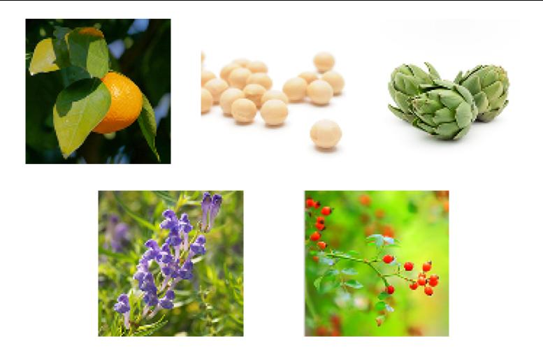 5種類的植物精華