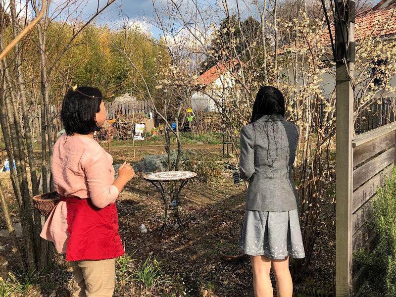 香草園的入口處有冬季金銀花