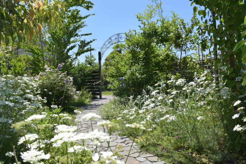 夏季的香草花園模樣