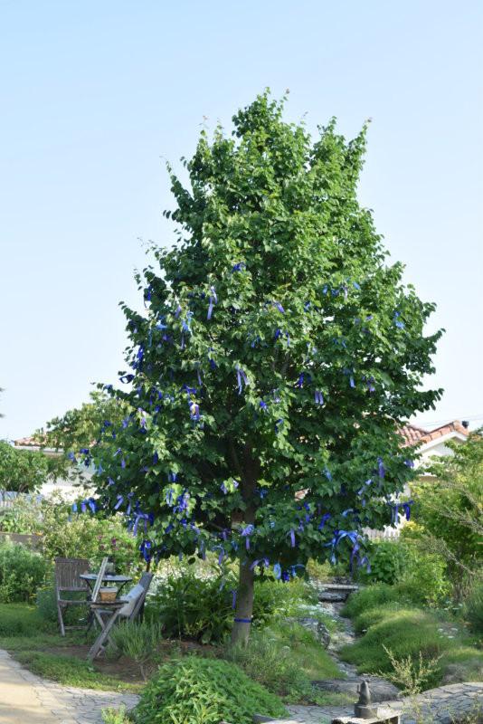 模仿妖精之樹的椴樹